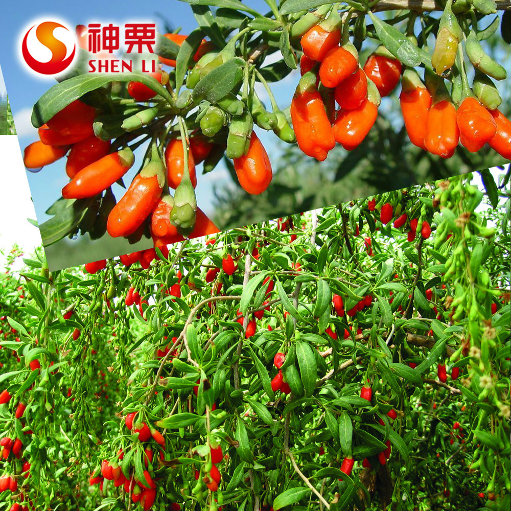 Good healthy Nature taste goji