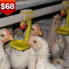 TA NO.1 Automatic feeding drinking cages for broiler chicken breeding