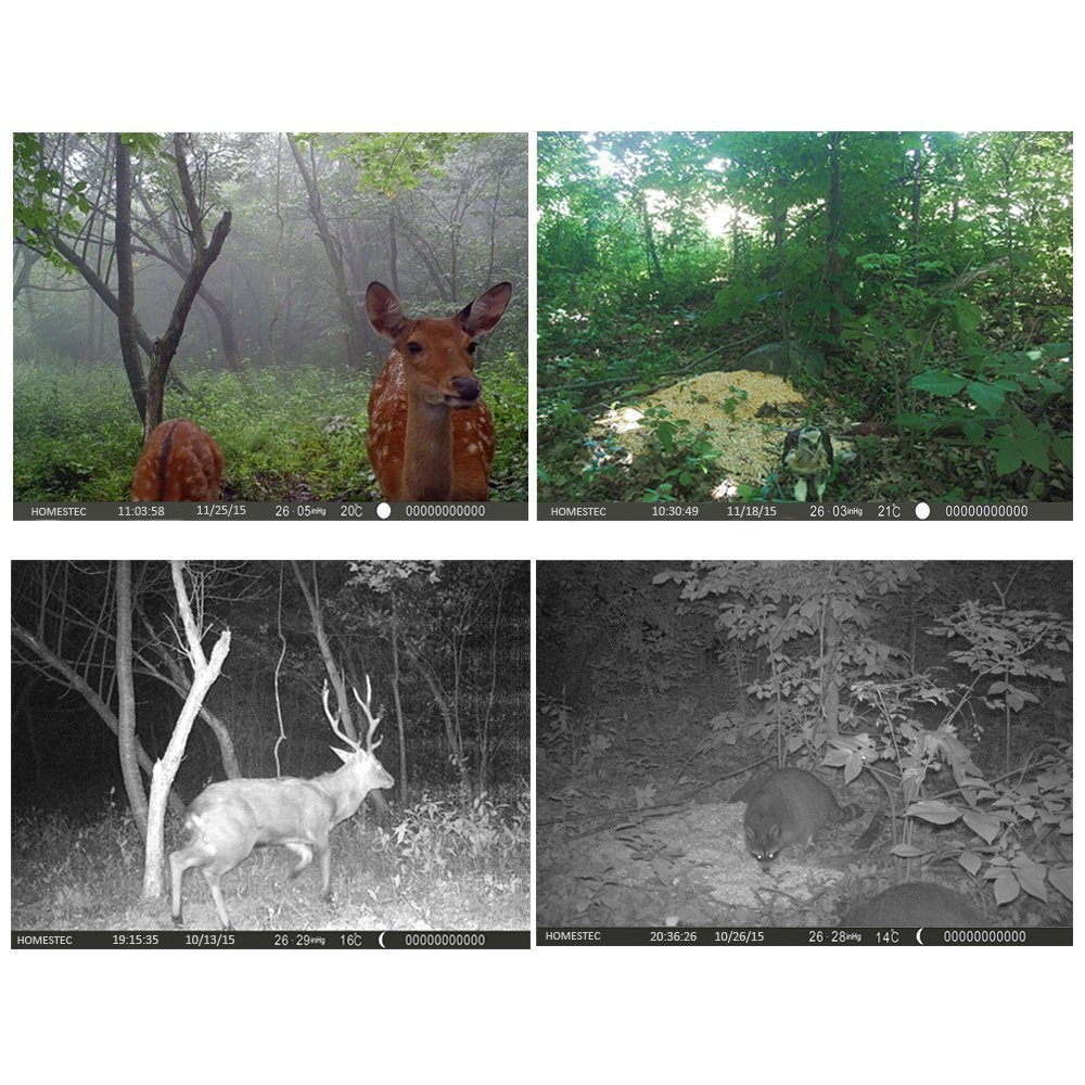 Photo Trap Trail Camera11.jpg