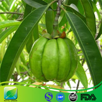 100% Natural Garcinia Cambogia Fruit Extract Hydroxycitric acid (HCA) 50% 60% 98%by HPLC