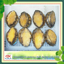 High Quality Frozen Abalone for sale