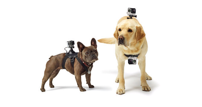 GTA Electronics GP197 Dog Harness for Action Camera