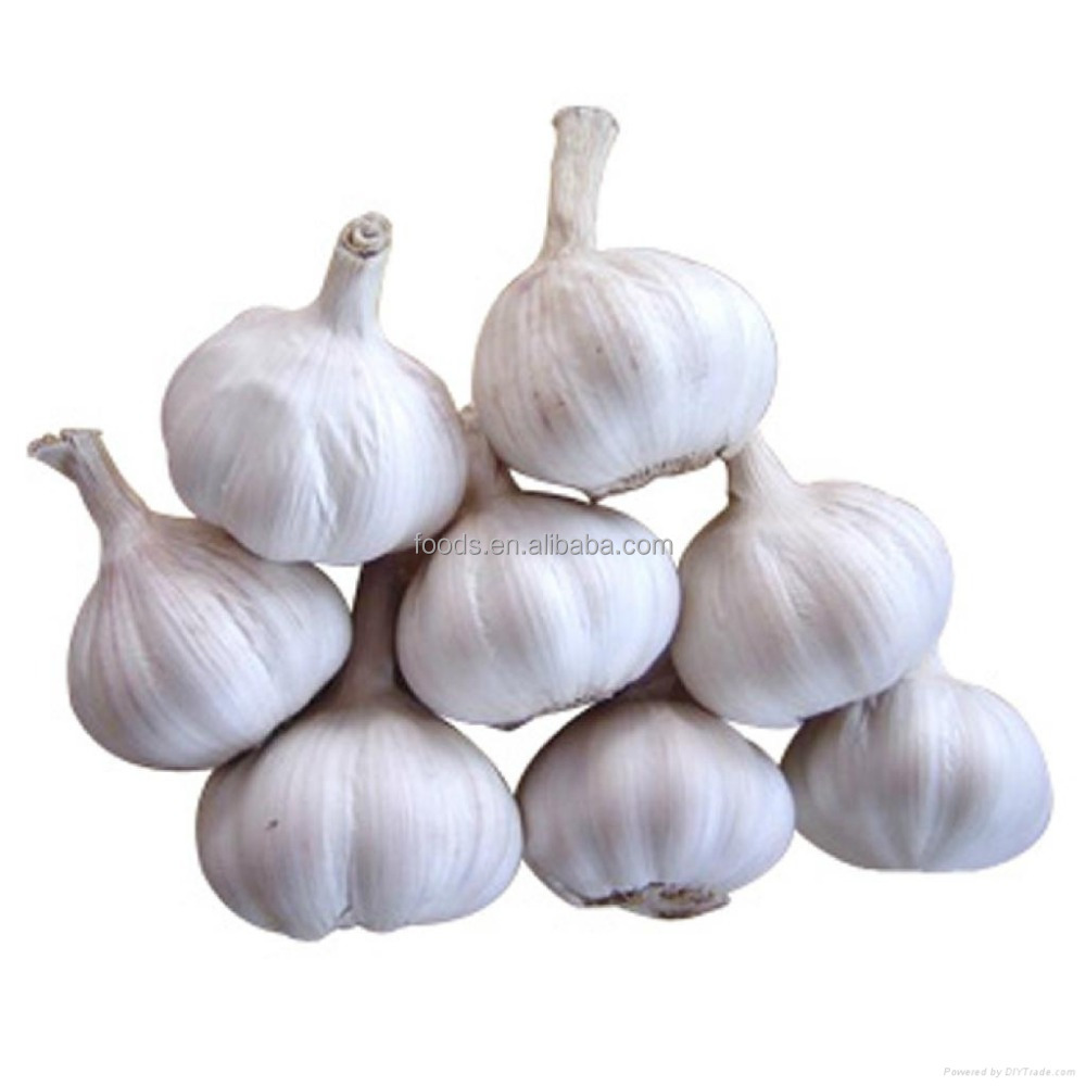 Jinxiang organic fresh garlic, bulk garlic for sale, garlic market