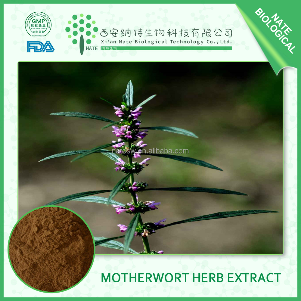 Hot Sales 100% Natural Motherwort Herb Extract and Leonurus sibiricus L Stachydrine 10:1