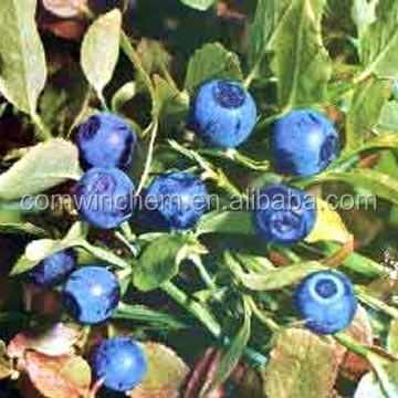 100% natural Bilberry Plant Extract Powder, Vaccinium myrtillus with Good Water-solution