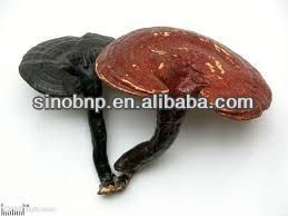 Buy Organic Ganoderma Extract