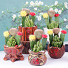 Cactus and succulent nursery most popular perennial flowers