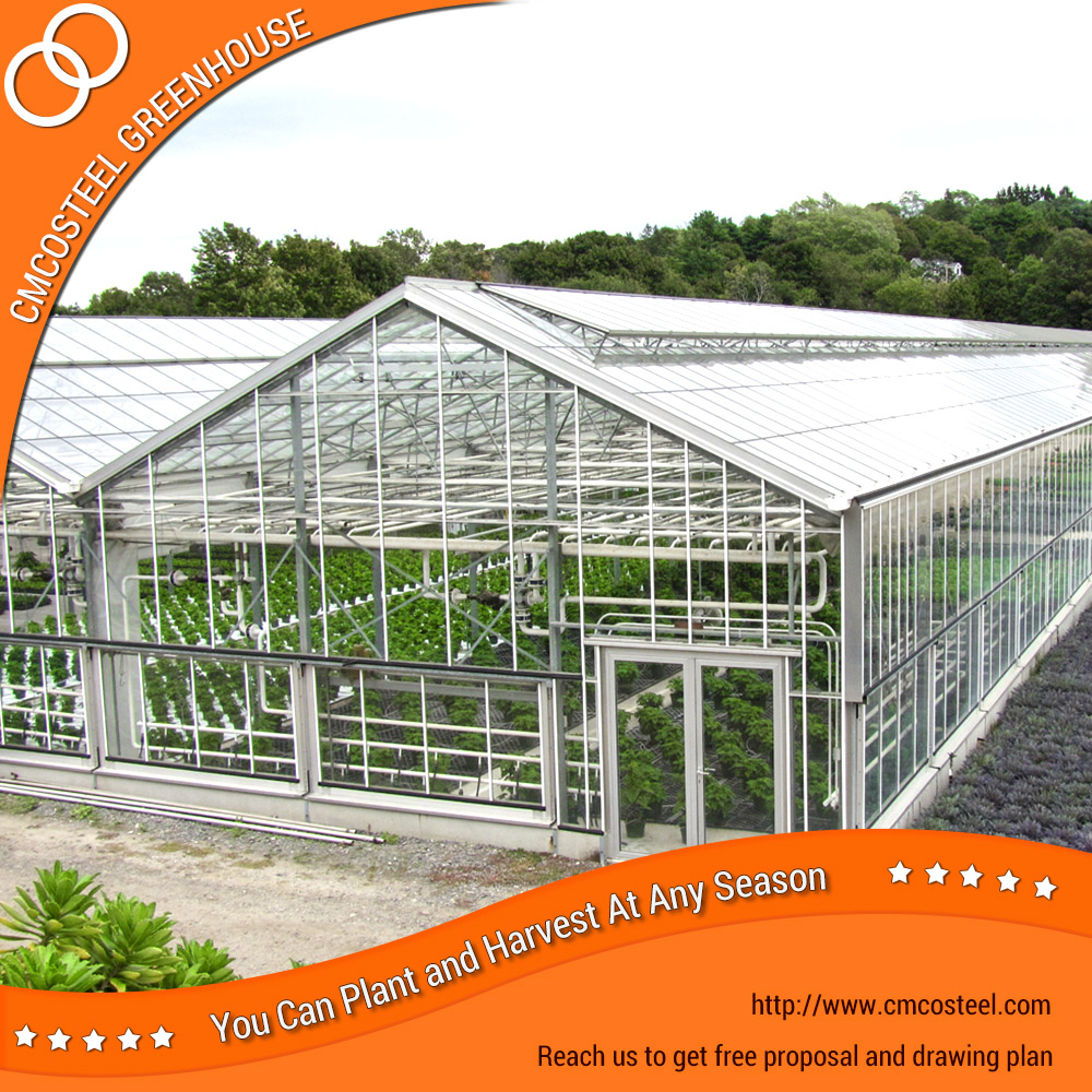 vegetable farming large scale glass green house