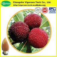 High quality Bayberry Fruit Extract Myrica rubra powder