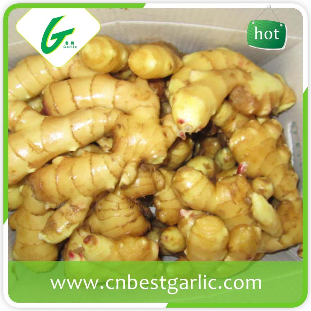 Fresh yellow China ginger price