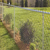Easily Assembled PVC Coated steel Metal wire mesh fence