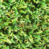 Turf Grass For Soccer Field Purple