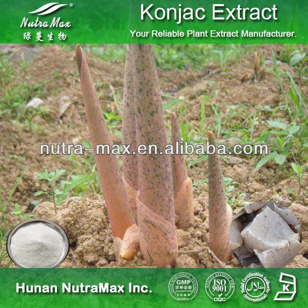 Supplier By Nutramax - Konjac Root Fiber Powder