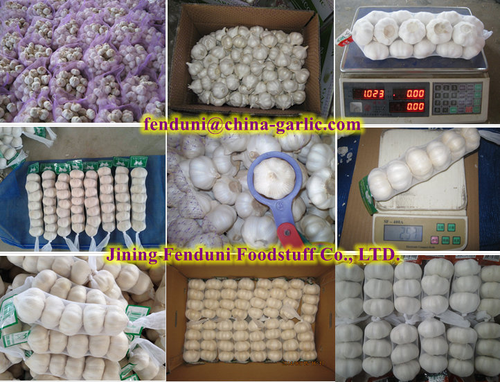 2016 Lowest China White Garlic Price-Selected high quality garlics