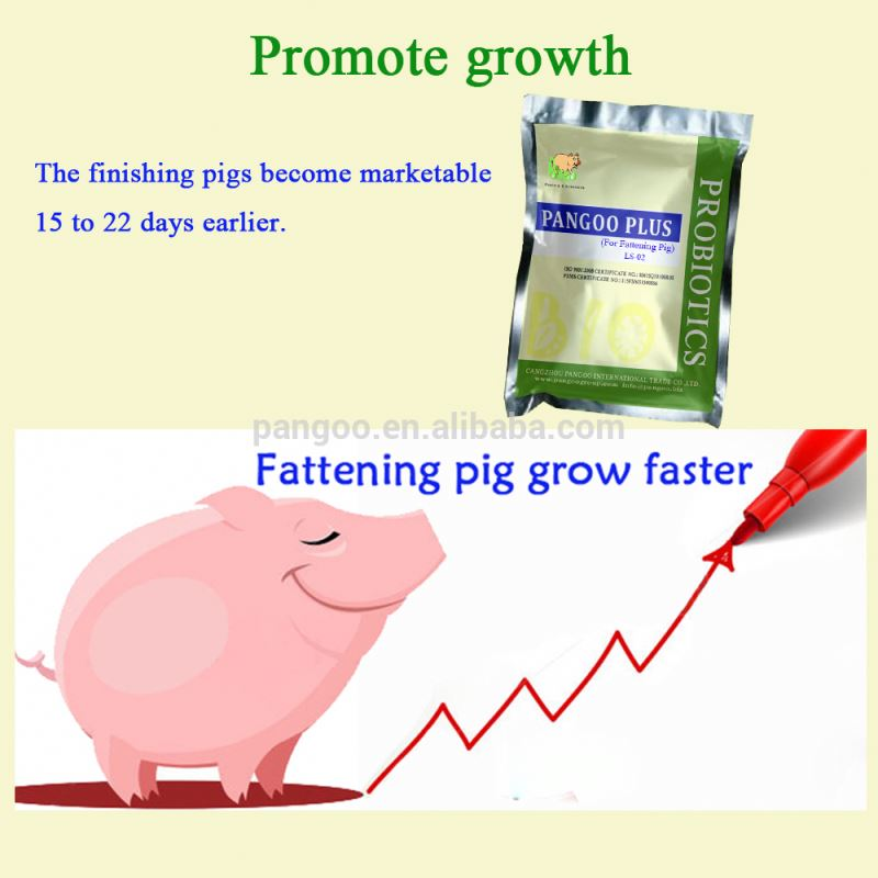 Pig Health Feed Probiotic for Fattening Pigs