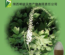Black cohosh extract 2.5% Triterpenoid saponins / Black Snakeroot Extract