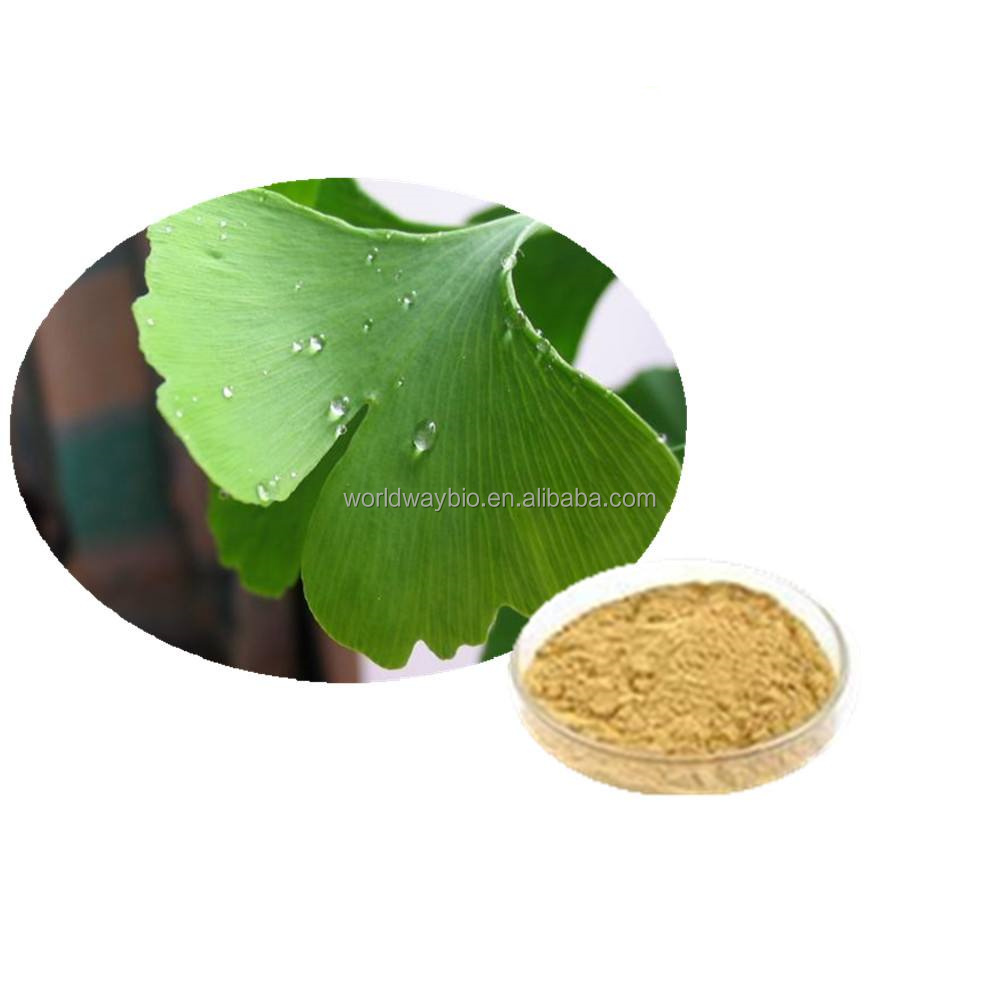 Alibaba golden supplier natural ginkgo biloba p.e with high content of total flavone glycosides 35% Gingko biloba extract