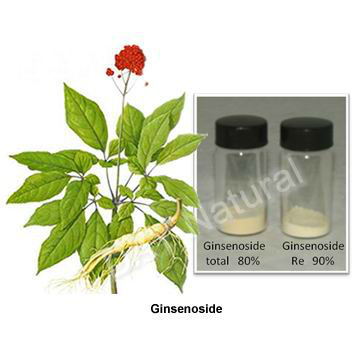Panax ginseng extract powder 80 ginsenosides(HOT)!