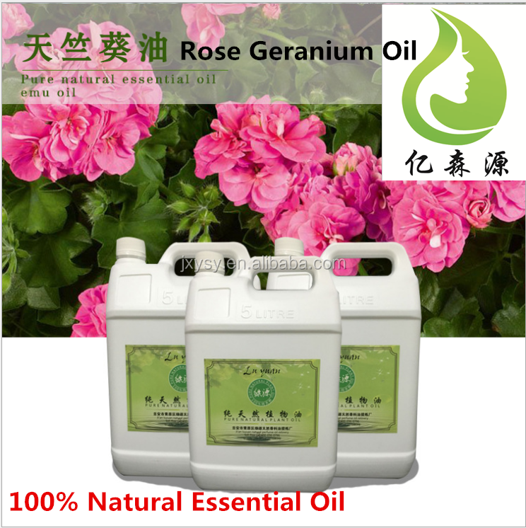 Edible Essential Oils Organic Rose Geranium Oil Fresh Geranium Extract Oil At Affordable Price