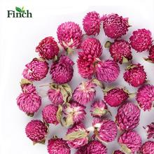 Finch New Arrival Herbal Flower Buds Gomphrena Globosa <strong>Tea</strong>