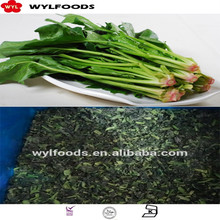 Frozen Spinach chopped High Quality Market Price