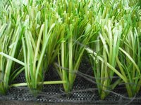 hot selling synthetic grass for soccer fields