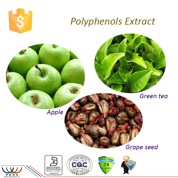 High quality green tea / apple extract / grape seed polyphenol 98%