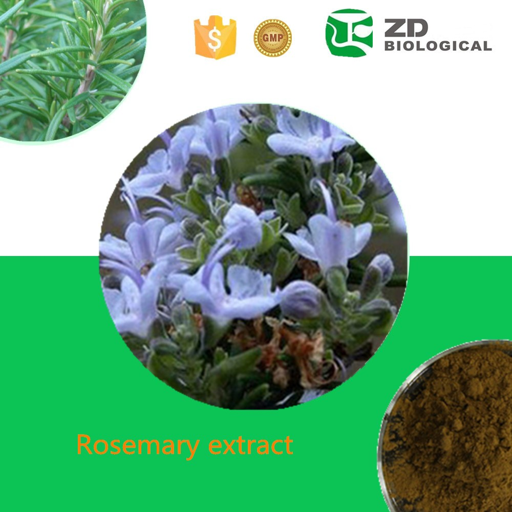 Organic Rosemary essential oil, Rosemary extracts, 8000-25-7 Carnosic acid