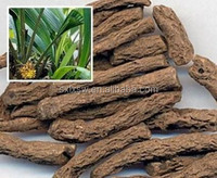 Hot sale competitive price herbal extract,Curculiginis Extract,Rhizoma Curculiginis