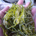 2018 crop Shredded frozen seaweed wakame stem for Seaweed Salad (hiyashi wakame)