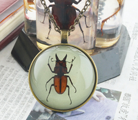 Glowing in dark Real insect resin necklace pendant Personalized jewelry boys Creative small gifts