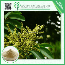 100% pure natural sapindoside 4:1 5:1 10:1 20:1 Soap Nut Extract/ FREE sample Soap nut powder/soap nut P.E.