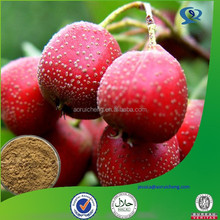 natural hawthorn berry/leaf powdered extract
