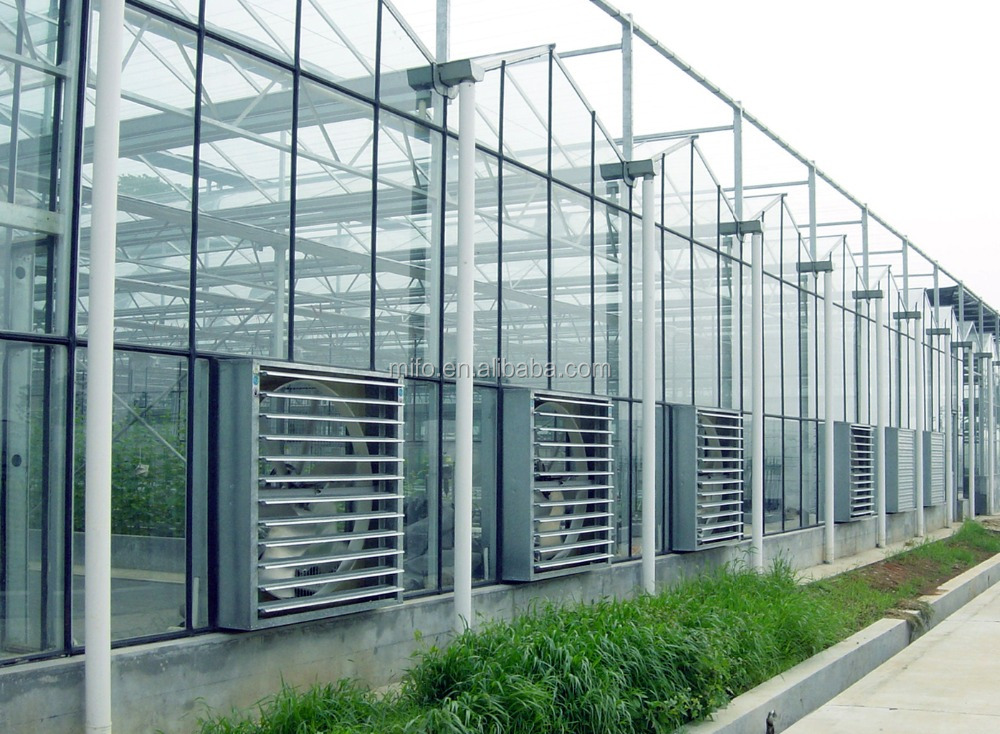Venlo Multi-span Glass Greenhouse for Commercial