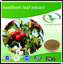 Pure Natural Hawthorn Berry Leaf Extract