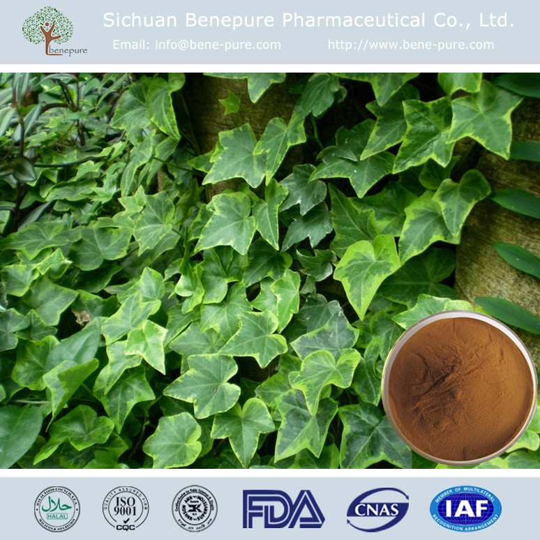 Wholesale Natural Ivy Leaf Extract 10:1/ 5%~15% Hederagenin