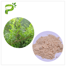 Hot sale natural plant derived vine tea extract
