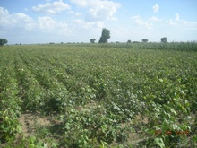 10000 acre land for bio-fuels inrajasthan for sell and lease