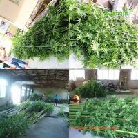 2014 China wholesale artificial bamboo tree plant