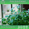GMP Standard Manufacturer Supply Gotu Kola Extract,Asiaticoside,Madecassoside,Total Triterpenoid glycosides