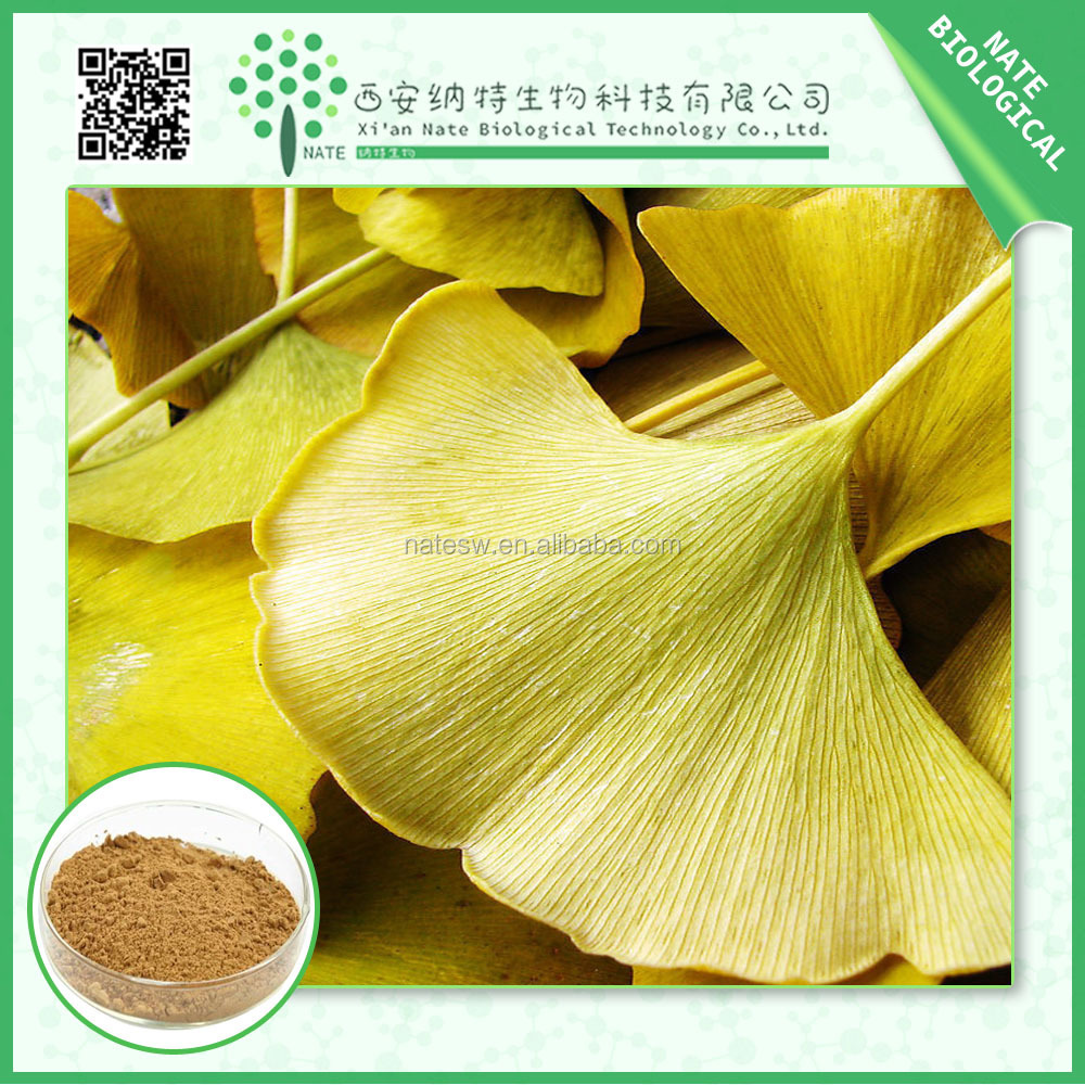 Extract Of high quality Ginkgo Biloba extract EP grade and Ginkgo biloba extract 2010 CAS 90045-36-6 from honest suppliers
