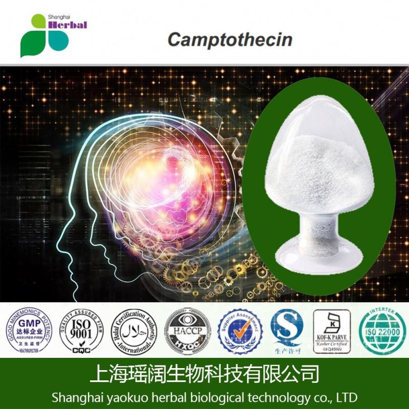 Camptotheca Extract 98% CPT Powder, Camptothecin to Anti Cancer Ingredient