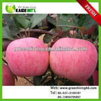 china yantai best fuji apple price