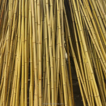 Cheap raw bamboo cane bamboo pole for plant
