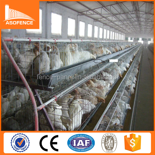 automatic chicken poultry equipment / A type poultry farm chicken layer cage