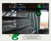 Battery Cage For Successful Farmers