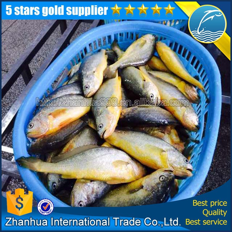 frozen seafood fish yellow croaker