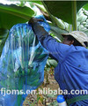 30 micron banana growing bags for Australian market