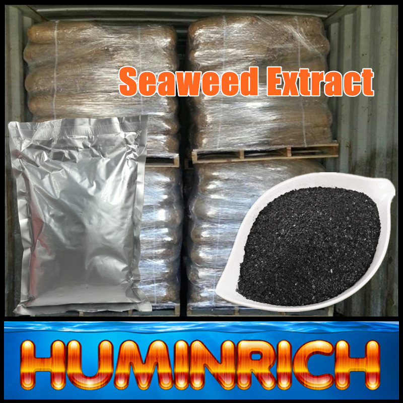Huminrich Plant Feeds Multifunction Fertilizer Sargasso Seaweed Extract