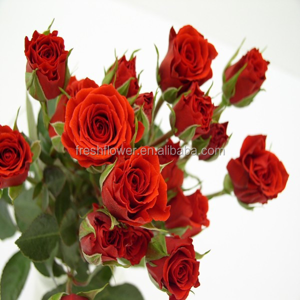 Fresh cut flower rose flower spray Rose for Wedding Decoration